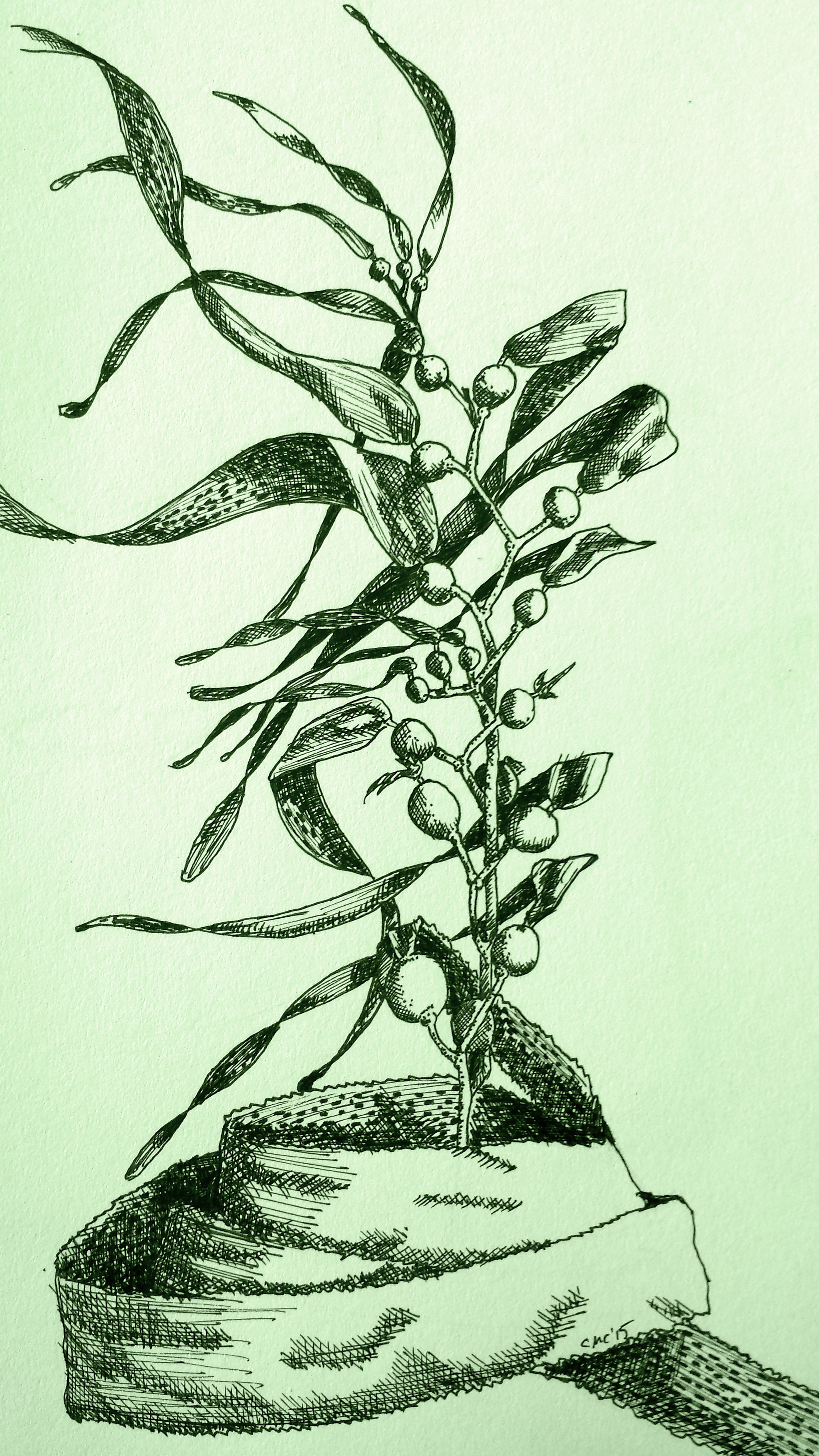 Line Drawing Kelp : Books not so magical adventures