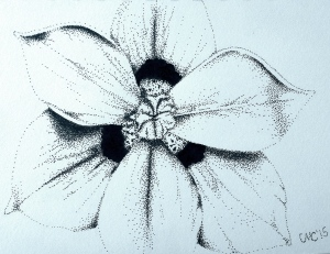 Random flower I found on the internet.  No useful file name to help identify it, and the attached Pintrest account was no help.  Lots of little dots aka Stippling!