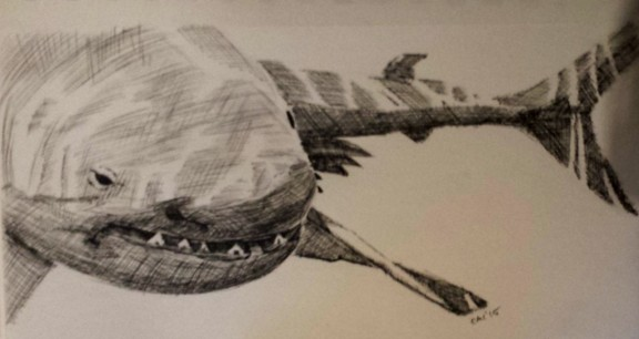 Shark_Drawing